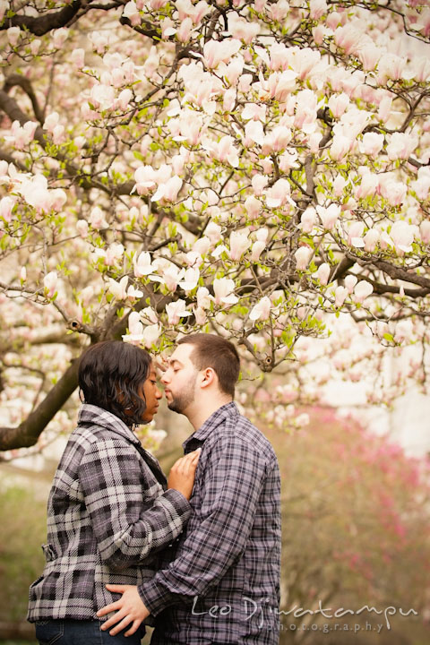 Engaged guy and girl by a flowering magnolia tree almost kissed. Pre wedding engagement photo session the Mall, National Monument, The Capitol, Washington DC by wedding photographer Leo Dj Photography