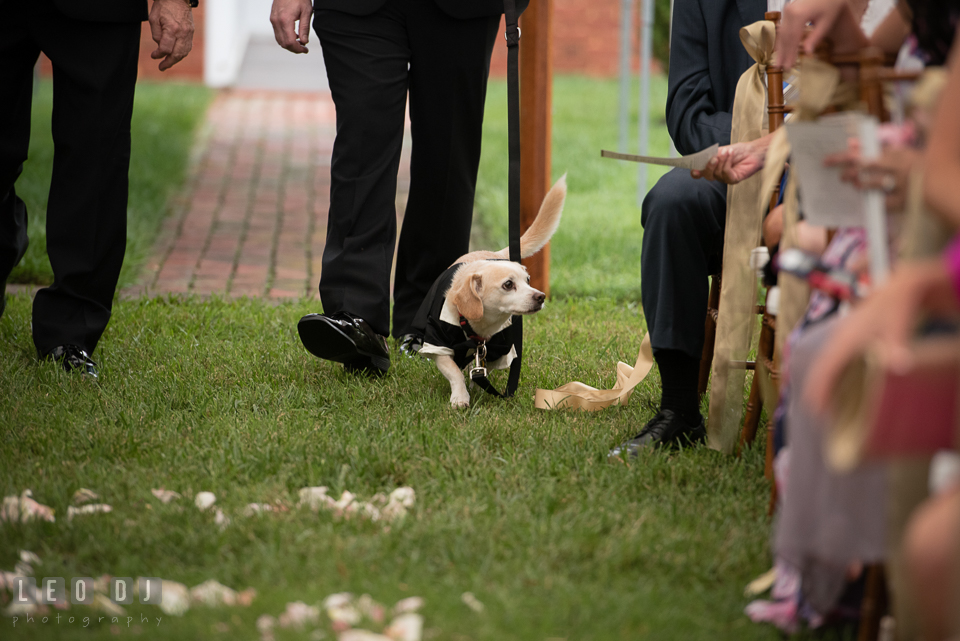 Aspen Wye River Conference Centers dog walking down the aisle for ceremony procession photo by Leo Dj Photography