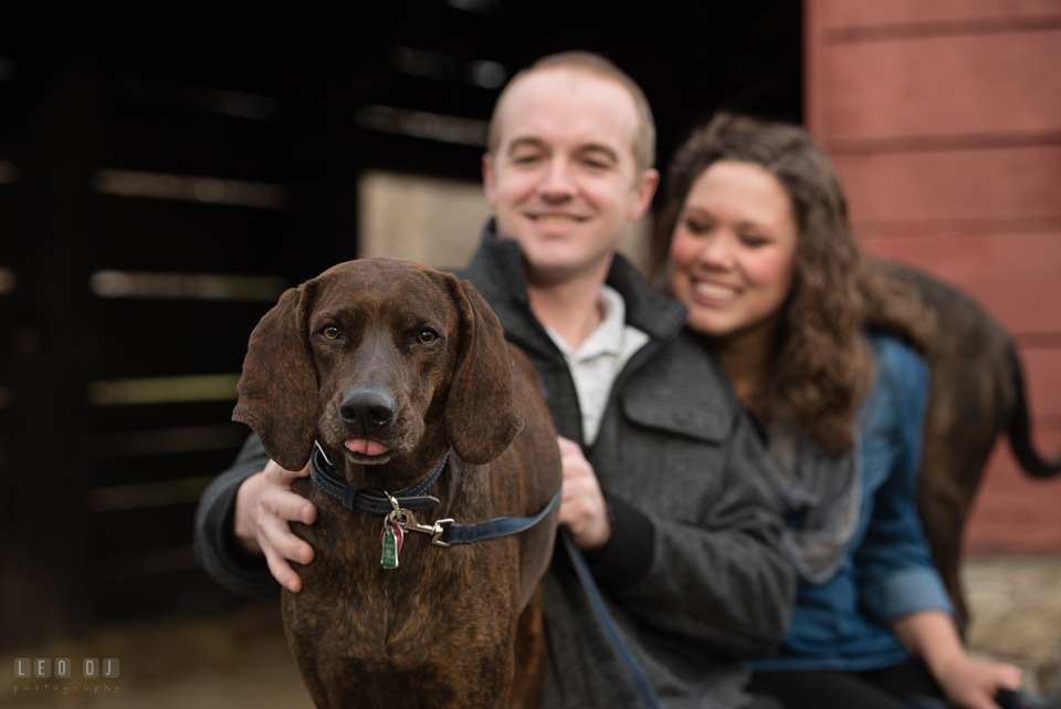 Baker Park Frederick Maryland engaged man with fiancee petting plott hound dog photo by Leo Dj Photography.