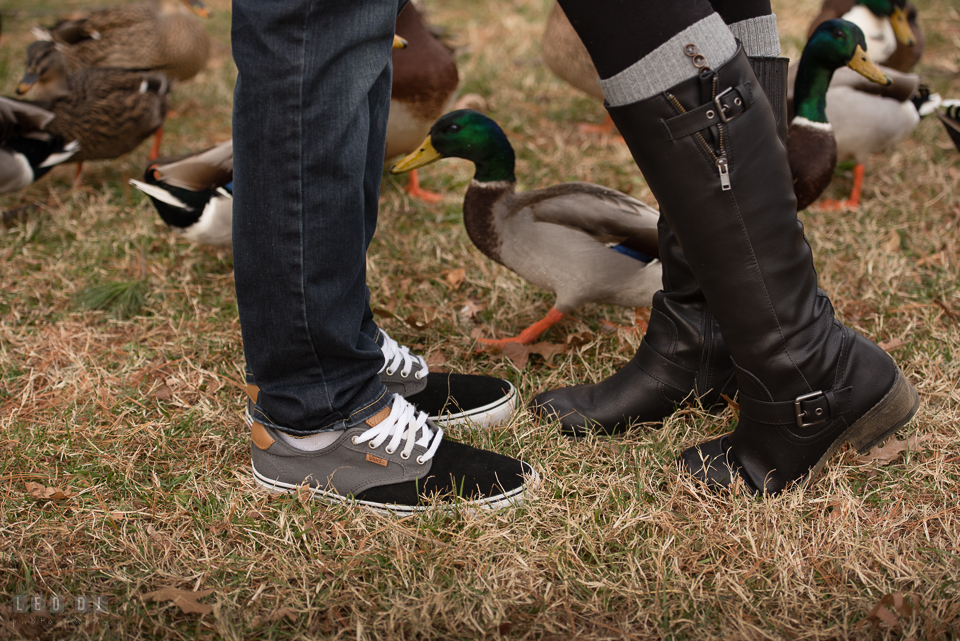 Baker Park Frederick Maryland ducks peeking through legs of engaged girl and fiance photo by Leo Dj Photography.