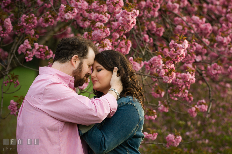 Engaged girl and her fiancé cuddling together by a pink blossoming tree. Baltimore MD pre-wedding engagement photo session at Sherwood Gardens, by wedding photographers of Leo Dj Photography. http://leodjphoto.com