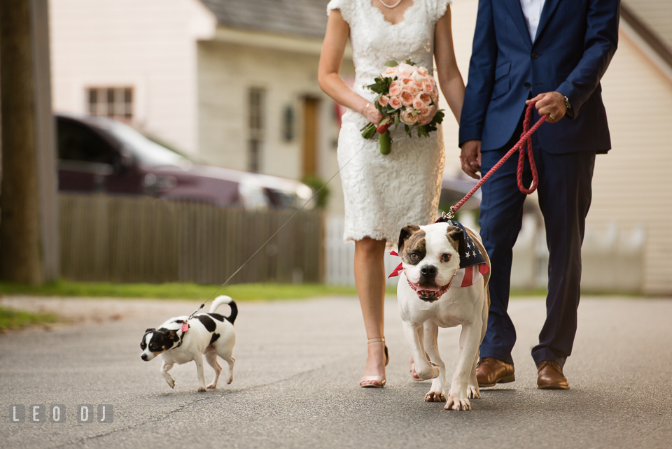 Bride and Groom walking with their dogs. The Oaks Waterfront Inn wedding, St Michaels, Eastern Shore, Maryland, by wedding photographers of Leo Dj Photography. http://leodjphoto.com