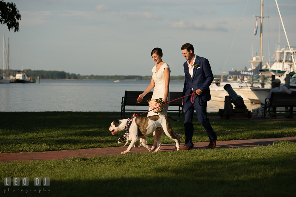 Bride and Groom strolling along the pier with their dogs. The Oaks Waterfront Inn wedding, St Michaels, Eastern Shore, Maryland, by wedding photographers of Leo Dj Photography. http://leodjphoto.com