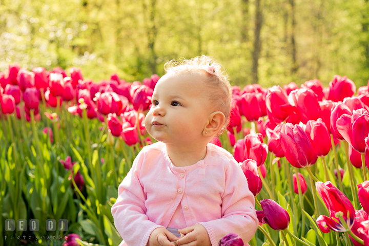 Baby standing by red tulips. Washington DC, Silver Spring, Maryland candid children and family lifestyle photo session by photographers of Leo Dj Photography.