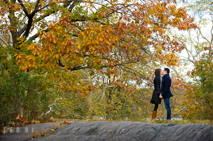 Engaged couple kissing by a tree with yellow fall foliage at Central Park . Pre-wedding engagement photo session at New York City, NY, by wedding photographers of Leo Dj Photography. http://leodjphoto.com