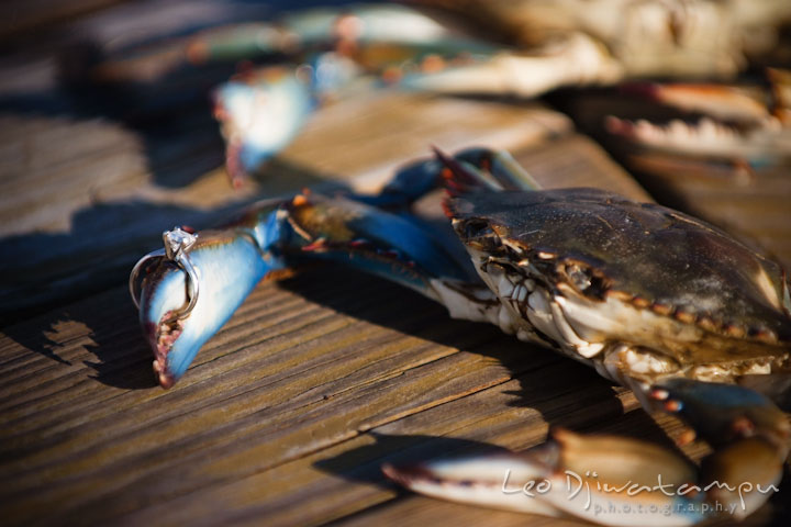 Diamond engagement ring on a blue crab claw. Stevensville, Kent Island, Maryland, Pre-Wedding Engagement Photographer, Leo Dj Photography