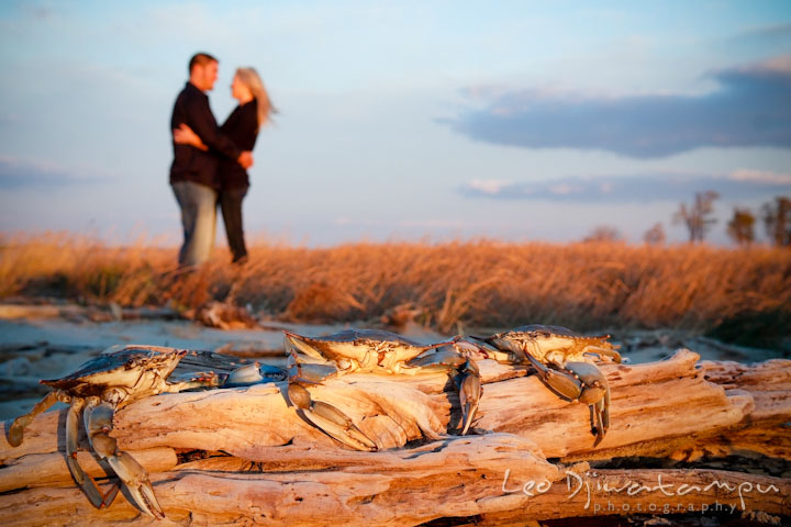 Engaged guy and girl hugging at the beach with Maryland blue crabs are perching on top of a driftwood. Stevensville, Kent Island, Maryland, Pre-Wedding Engagement Photographer, Leo Dj Photography
