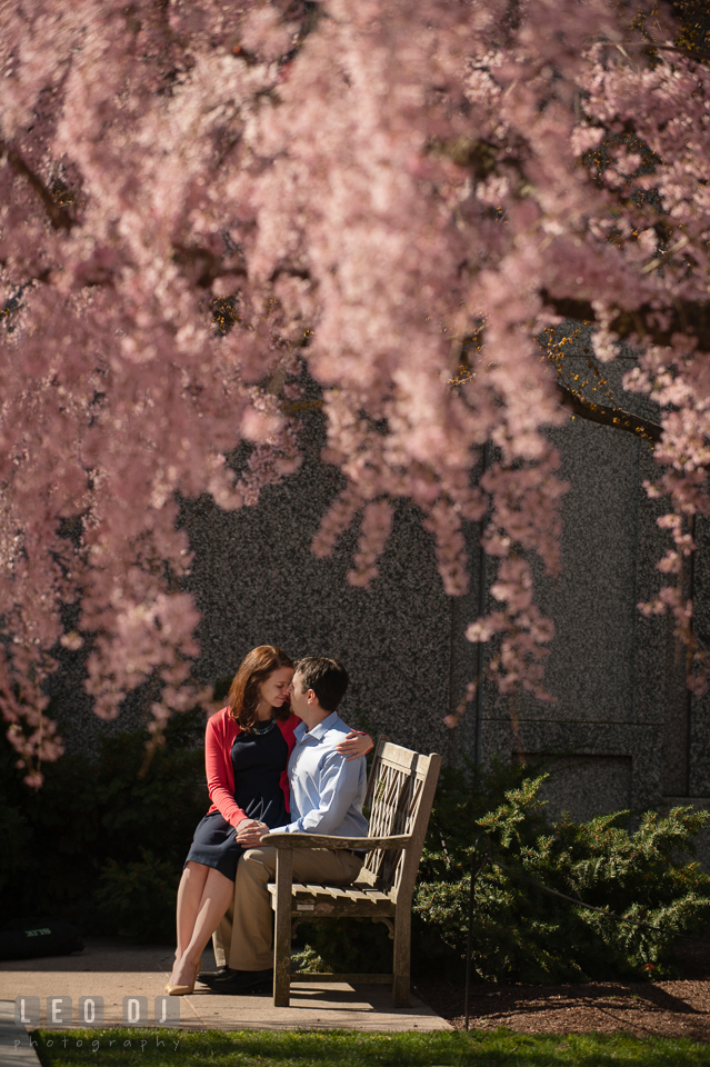 Engaged couple sitting together on a bench, hugging, under a weeping cherry blossoms tree. Washington DC pre-wedding engagement photo session at Adams Morgan and the Smithsonians, by wedding photographers of Leo Dj Photography. http://leodjphoto.com