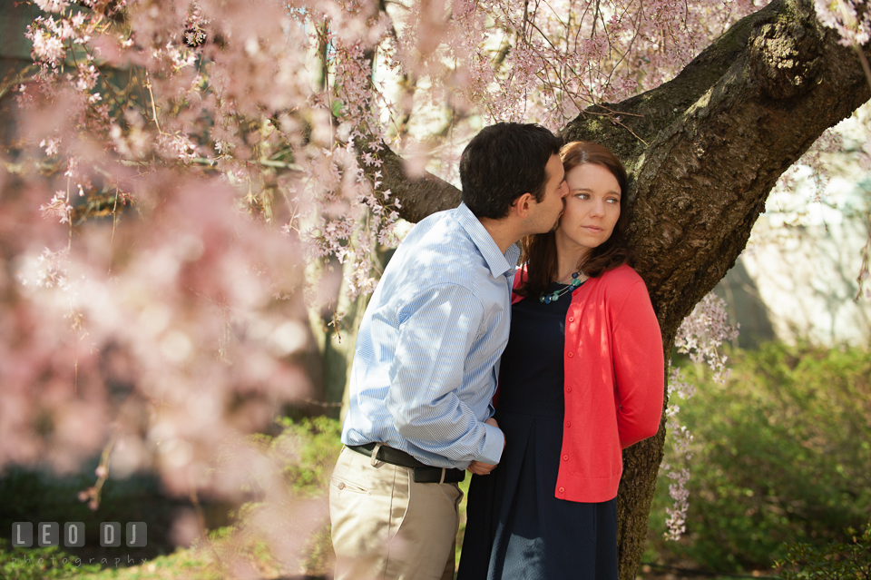 Engaged guy kissing his fiancée under a weeping cherry blossoms tree. Washington DC pre-wedding engagement photo session at Adams Morgan and the Smithsonians, by wedding photographers of Leo Dj Photography. http://leodjphoto.com