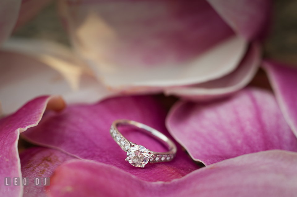 Close up shot of diamond engagement ring on top of magnolia flower petals. Washington DC pre-wedding engagement photo session at Adams Morgan and the Smithsonians, by wedding photographers of Leo Dj Photography. http://leodjphoto.com