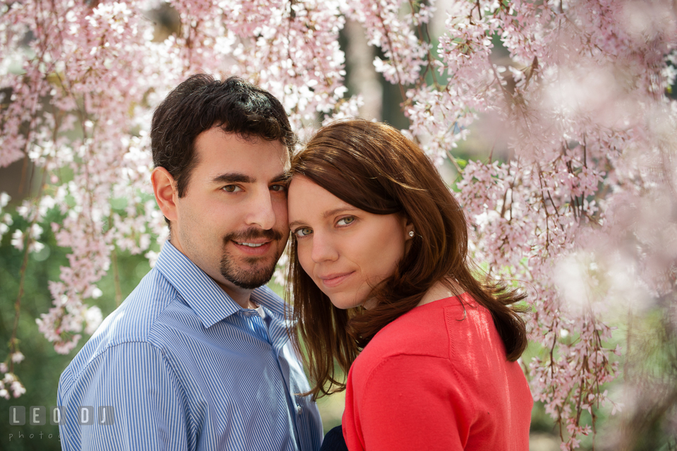 Engaged couple posing under a weeping cherry blossoms tree. Washington DC pre-wedding engagement photo session at Adams Morgan and the Smithsonians, by wedding photographers of Leo Dj Photography. http://leodjphoto.com