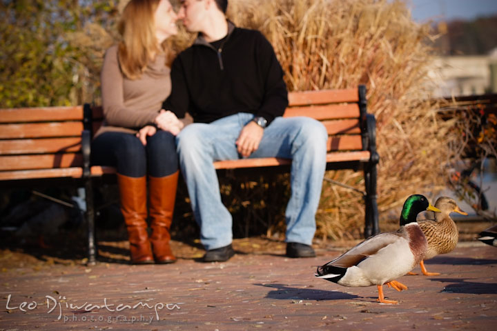 Mallard ducks crossing while engaged couple almost kissed in the background. Chestertown Maryland and Washington College Pre-Wedding Engagement Session Photographer, Leo Dj Photography