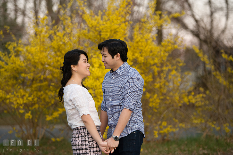 Engaged couple by a forsythia tree holding hands and smiling together. Quiet Waters Park Annapolis Maryland pre-wedding engagement photo session, by wedding photographers of Leo Dj Photography. http://leodjphoto.com