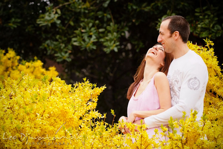 Engaged couple laughing in the midst of forsythia shrub. Washington DC Tidal Basin Cherry Blossom Pre-Wedding Engagement Photo Session by Wedding Photographer Leo Dj Photography